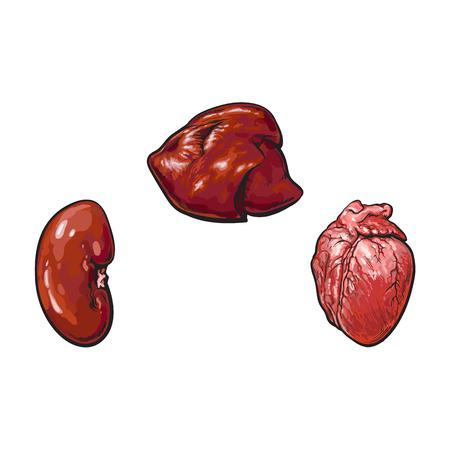vector varkensvlees rauwe nier, leverhartafval schets set. Geïsoleerde illustratie op een witte achtergrond. Hand getrokken varkensafval