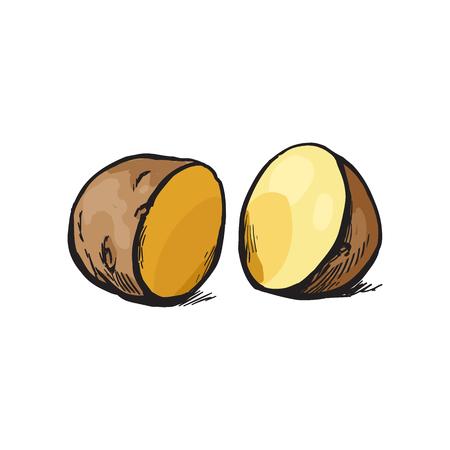 ベクター スケッチ漫画熟した生皮が付いたまま半分は黄色いジャガイモをスライスしました。白い背景に分離の図。野菜の新鮮な自然製品、健康的  イラスト・ベクター素材