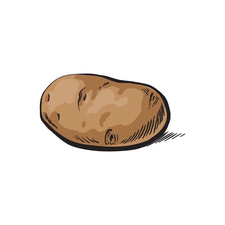 벡터 스케치 만화 익은 원시 unpeeled 노란 감자입니다. 흰색 배경에 고립 된 그림입니다. 야채 신선한 천연 제품, 건강한 라이프 스타일, 개념을 먹고