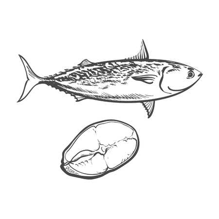 vector schets cartoon zee vis tonijn. Geïsoleerde illustratie op een witte achtergrond. Zee delicatesse eten concept Stock Illustratie