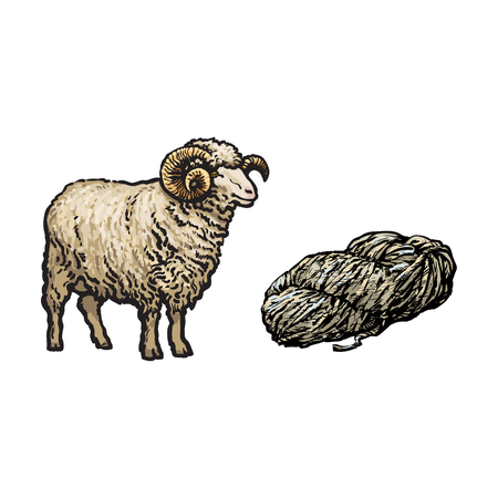 vector sketch cartoon style horned ram and cutted lamb wool set. Isolated illustration on a white background. Hand drawn animal with big twisted horns. Cattle farm cloven-hoofed livestock animal