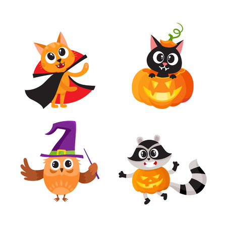 owl illustration: Set of animal characters - cat, owl, raccoon - in Halloween costumes, cartoon vector illustration isolated on white background. Set of animal characters celebrating Halloween, trick or treat