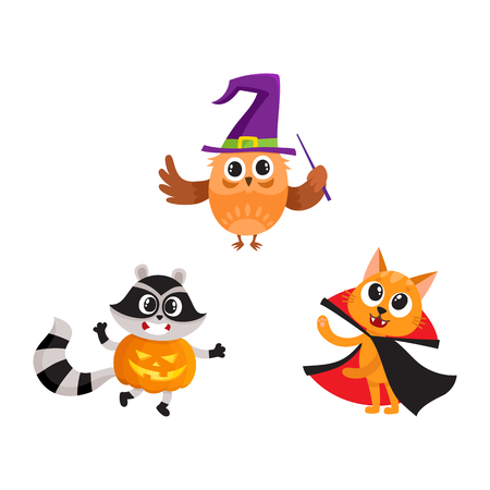 at, owl and raccoon animal characters in Halloween costumes, cartoon vector illustration isolated on white background. Cat, owl and raccoon animal characters celebrating Halloween