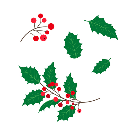 vector flat cartoon style holly tree, mistletoe or ilex branch,leaves and berries set. Isolated illustration on a white background. Christmas cards, banners of presentation decoration design symbol