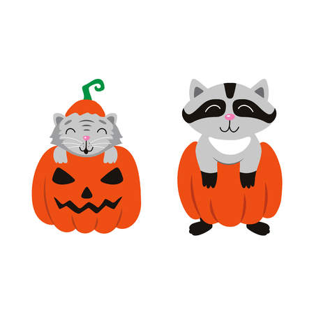 vector flat cartoon funny cute cat sitting at halloween scary pumpkin with gourd hat with stem on head, and racoon set. Isolated illustration on a white background. Fancy animal concept