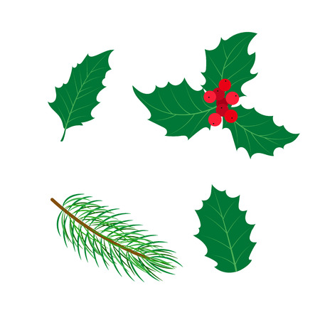 vector flat holly tree, mistletoe or ilex branch,leaves and berries and spruce branch set. Isolated illustration on a white background. Christmas natural green colored floral decoration design symbol