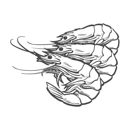 vector sketch cartoon sea crayfish lobster. Isolated illustration on a white background. Sea delicacy food concept