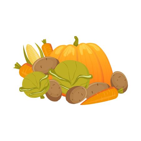 Heap, pile, group of autumn vegetables - carrot, pumpkim, corn, cabbage, potato, cartoon vector illustration isolated on white background. Cartoon vegetables - carrot, pumpkim, corn, cabbage, potato Çizim