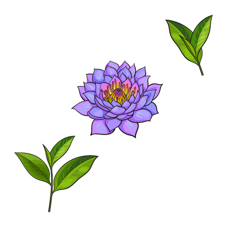 vector sketch cartoon lotus flower blossom blooming, green tea leaves branch set. Isolated illustration on a white background. Symbols of meditation, buddhism Sri-lanka and India