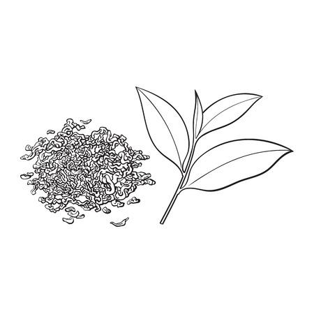 手描きパイル、ヒープ、ドライティーの一握りと新鮮な若い葉、白い背景に孤立したスケッチベクトルイラスト。ドライティーとフレッシュリーフ
