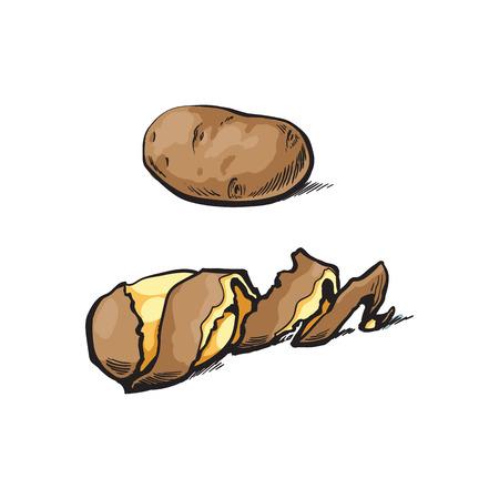 벡터 스케치 만화 익은 원시 unpeeled, 나선형 트위스트 껍질과 노란색 감자 껍질을 벗 겨. 흰색 배경에 고립 된 그림입니다. 야채 신선한 천연 제품, 건강 일러스트