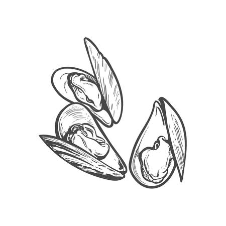 Vector schets cartoon zee mossel, oester. Geïsoleerde illustratie op een witte achtergrond. Zee delicatesse eten concept Stockfoto - 85691849