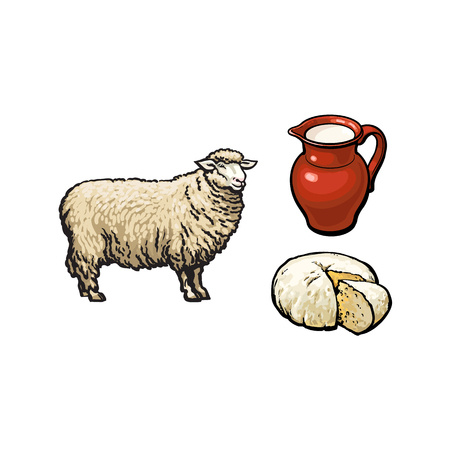 vector sketch cartoon style sheep, milk pither and cheese. Isolated illustration on a white background. Hand drawn animal without horns. Cattle, farm cloven-hoofed livestock animal, wool lamb products