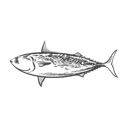 Vektor Skizze Cartoon Seefisch Thunfisch. Getrennte Abbildung auf einem weißen Hintergrund. Meer Delikatesse Lebensmittelkonzept Standard-Bild - 85862996
