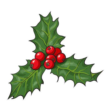 잎과 열매, 홀리 베리와 미 슬 토 지점 크리스마스 장식 요소, 흰색 배경에 스케치 벡터 일러스트 레이 션. 나뭇잎과 열매, 크리스마스 장식과 함께 미  일러스트