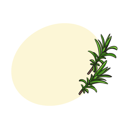 rosemary herbs, spices, ingredients, sketch style vector illustration on white background. Realistic hand drawing of rosemary leaves with space for text.