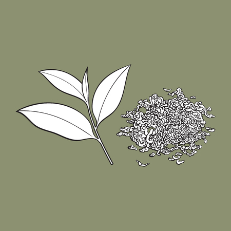 Hand drawn pile, heap, handful of dry tea and fresh young leaf, sketch vector illustration isolated on white background. Realistic hand drawing of dry tea and fresh leaf