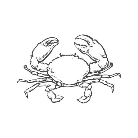 벡터 스케치 만화 바다 왕새우 크랩. 흰색 배경에 고립 된 그림입니다. 바다 진미 식품 개념
