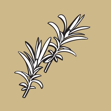 rozemarijn kruiden, specerijen, ingrediënten, zwart-wit overzicht schets stijl vectorillustratie op kleur achtergrond. Realistische handtekening van rozemarijnbladeren met ruimte voor tekst. Stock Illustratie