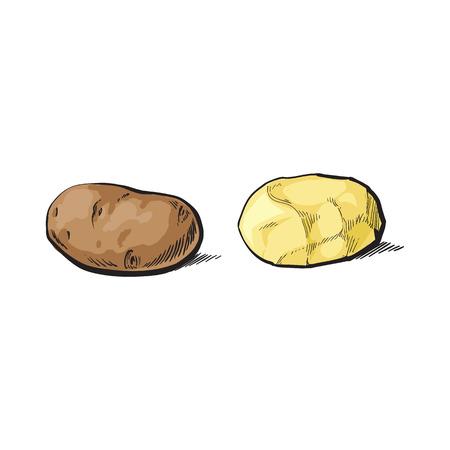 벡터 스케치 만화 익은 원시 unpeeled 및 껍질을 벗 겨 노란 감자를 설정합니다. 흰색 배경에 고립 된 그림입니다. 야채 신선한 천연 제품, 건강한 라이프
