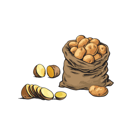 vector sketch cartoon ripe raw peeled yellow sliced potato and potato bag set . Isolated illustration on a white background. Vegetable fresh natural product, healthy lifestyle, eating concept Иллюстрация
