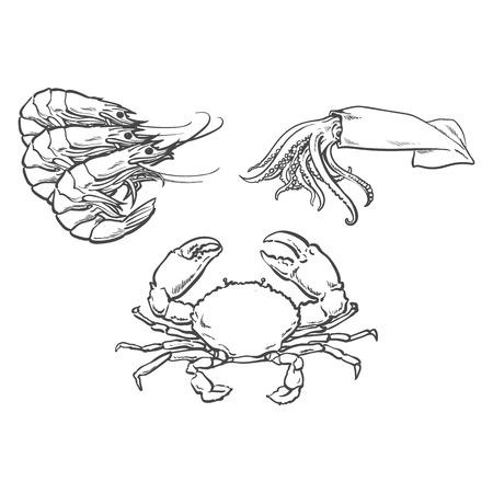 벡터 스케치 만화 바다 가재 랍스터, 게 및 오징어. 흰색 배경에 고립 된 그림입니다. 바다 진미 식품 개념