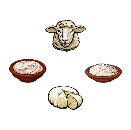 vector sketch cartoon style, sheep head cottage cheese plate, sour cream set. Isolated illustration on a white background. Hand drawn femrented milk product design objects Illustration