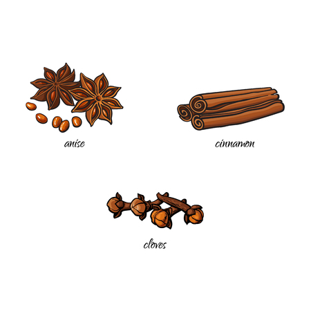 vector flat cartoon sketch hand drawn Spices, seasoning, flavorings and kitchen herbs set. Star anise with seeds, dry cinnamon, canella sticks and cloves. Isolated illustration on a white background