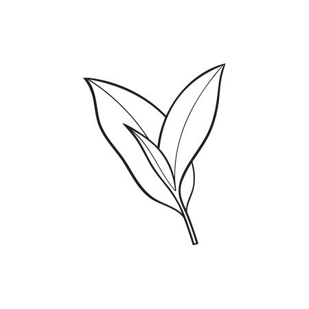 ベクター スケッチ漫画スタイル茶葉支店。白い背景に分離の図。手には、若い苗木スリランカ、インドのシンボルが描かれました。グラフィック デ