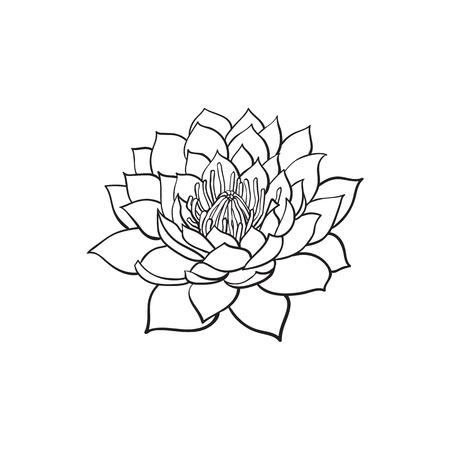 Vektor-Skizze Cartoon Lotus Blume Blühen Blühen. Getrennte Abbildung ...