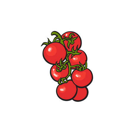 Fresh red vine tomatoes, sketch style vector illustration isolated on white background. Realistic hand drawn ripe red vine tomatoes, vector illustration