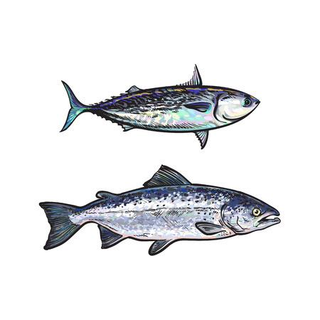 vector schets cartoon stijl zeevis zalm en tonijn set. Geïsoleerde illustratie op een witte achtergrond. Zeevruchten delicatesse, restaurant menu decoratie ontwerp object concept Stock Illustratie