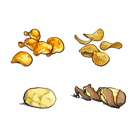 vector sketch cartoon ripe raw peeled yellow potato with spiral twisted peel, fluted and simple chips set . Isolated illustration on a white background.