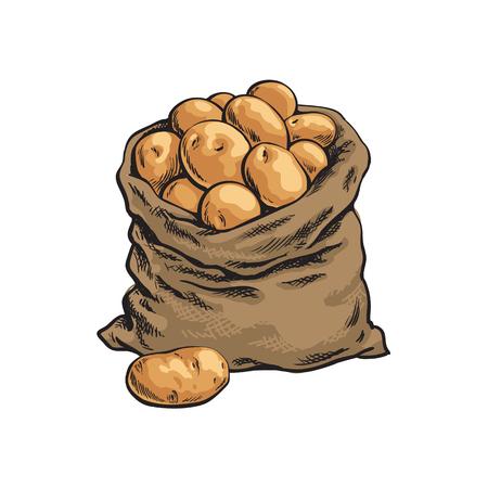 Sacco di iuta pieno di patate mature, disegnato a mano, illustrazione vettoriale stile schizzo isolato su sfondo bianco. Sacco pieno disegnato a mano della patata della tela da imballaggio, illustrazione isolata di vettore