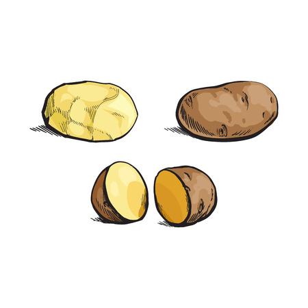 벡터 스케치 만화 익은 원시 unpeeled, 벗 겨 및 슬라이스 노란색 감자를 설정합니다. 흰색 배경에 고립 된 그림입니다. 야채 신선한 천연 제품, 건강한 라