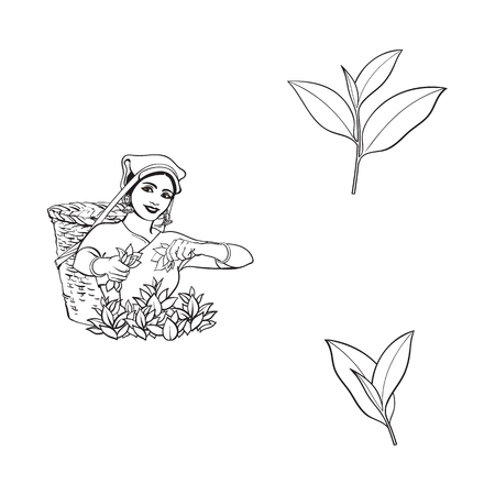 vector sketch cartoon indian Sri-lanka local woman collecting tea in tradition way smiling in big wicker basket, tea leaves set. Traditionally dressed female character, hand drawn india symbols Ilustrace
