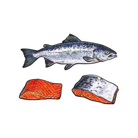 vector sketch cartoon sea red salmon fish and meat fillet steak with, without skin front side view set. Isolated illustration on a white background. Seafood delicacy, restaurant menu decoration design