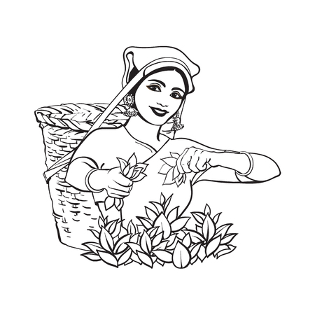collect: vector sketch cartoon indian Sri-lanka local woman collecting tea in tradition way smiling in big wicker basket. Traditionally dressed female character, hand drawn sri-lanka , india symbols