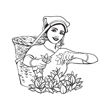 Vettore schizzo cartone animato donna indiana Sri-lanka locale raccolta tè nel modo di tradizione sorridente nel grande cesto di vimini. Carattere femminile tradizionalmente vestito, sri-lanka disegnati a mano, simboli dell'India Archivio Fotografico - 87270458
