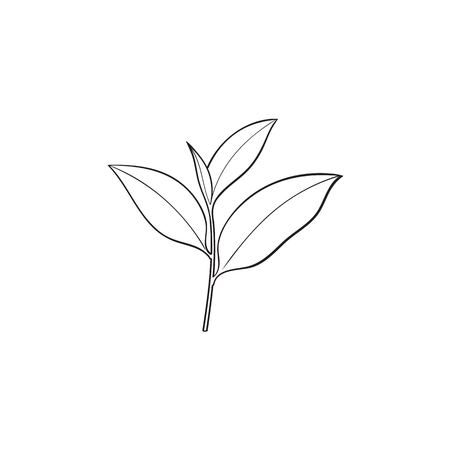 vector sketch cartoon style green tea leaves branch. Isolated illustration on a white background. Hand drawn young saplings sri-lanka , india symbols. Elements for graphic design
