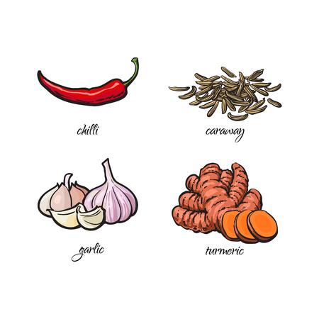 Hand drawn chili pepper, garlic, turmeric and caraway seeds with caption, sketch vector illustration on white background. Realistic hand drawing of chili pepper, garlic, turmeric and caraway seeds