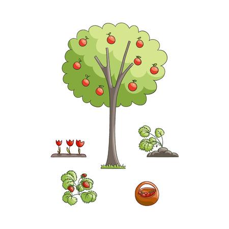 벡터 플랫 만화 스타일 뜰을 만드는 기호 설정 - 빨간 사과, 튤립, 딸기 식물 사과 나무와 바구니에 수집 된 딸기. 흰색 배경에 고립 된 그림입니다. 일러스트
