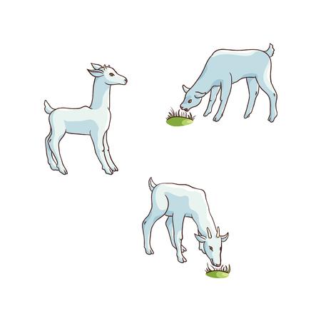 벡터 플랫 만화 시골 농장 농촌 동물 장면. 녹색 잔디 방목하는 goatling 함께 흰색 염소입니다. 흰색 배경에 고립 된 그림입니다.