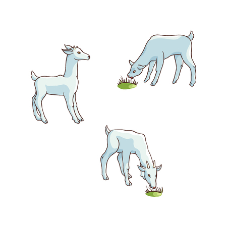 vector flat cartoon countryside farm rural animals scene. White goats with goatling grazing green grass. Isolated illustration on a white background.