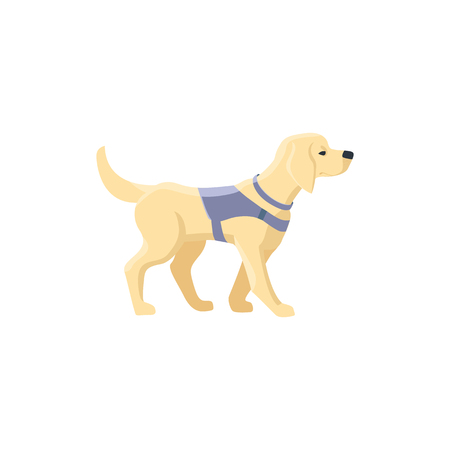 Guide dog, specially trained seeing eye for a blind person, flat cartoon vector illustration isolated on white background. Flat cartoon Labrador guide dog for blind people Illustration