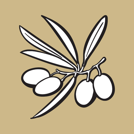 Olives black and white outline sketch style vector illustration on color background. Realistic hand drawing of olives with space for text.