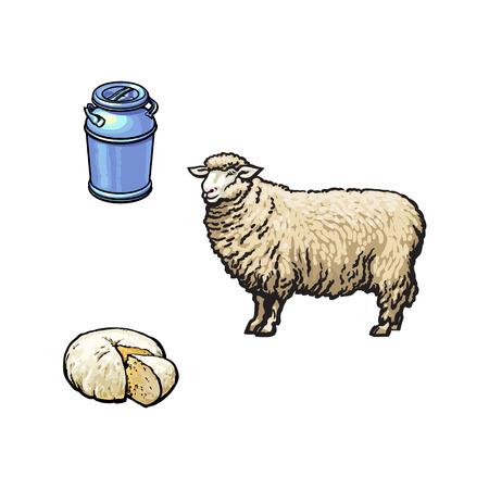 Moutons de style dessin animé de croquis de vecteur, récipient de lait-cannette en acier inoxydable et fromage. Illustration isolée sur un fond blanc. Animal dessiné à la main sans cornes, produits laitiers fermentés. Banque d'images - 87744193
