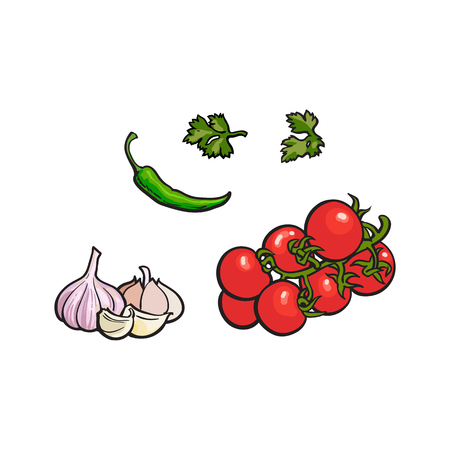 Vegetable - vine tomato, garlic, parsley and green chili pepper, sketch style vector illustration isolated on white background. Hand drawn tomato, garlic, parsley and chili pepper Illusztráció