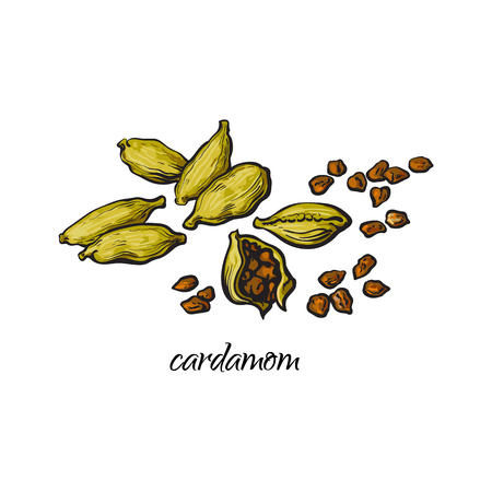 Pile, heap of cardamom, cardamon pods and seeds with caption, sketch style vector illustration isolated on white background. Hand drawn pile of cardamom seeds and green pods