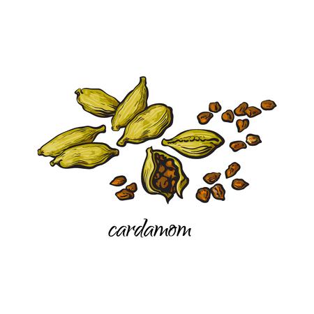 Stos, sterty kardamon, kardamon strąki i nasiona z podpisem, styl szkic wektor ilustracja na białym tle. Ręcznie rysowane kupie nasiona kardamonu i zielone strąki